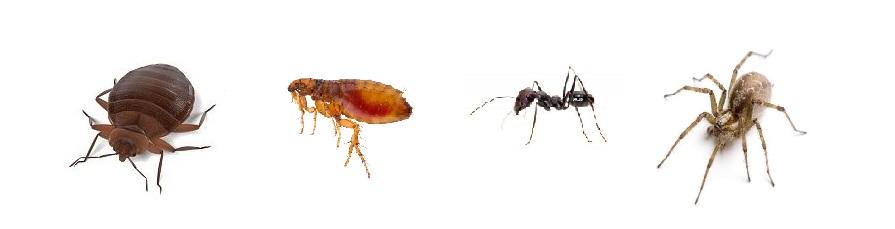 insectes maison qui piquent ventana blog. Black Bedroom Furniture Sets. Home Design Ideas
